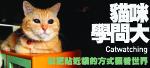 貓咪學問大