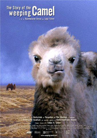 駱駝駱駝不要哭 DVD
